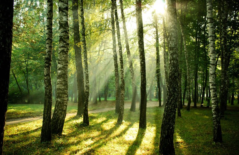 sunrise-forest-plain-wall-murals