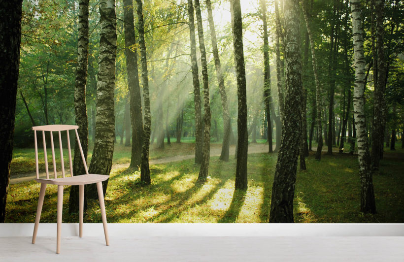 sunrise-forest-room-wall-murals