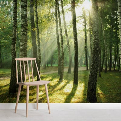 sunrise-forest-square-wall-murals