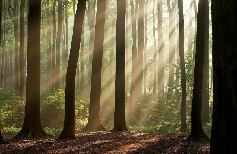 sunshine-rays-forest-plain-wall-murals