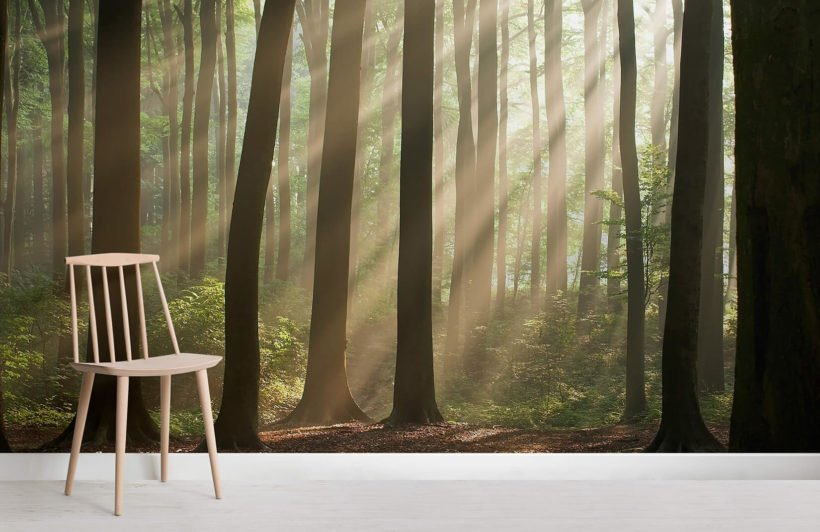 sunshine-rays-forest-room-wall-murals
