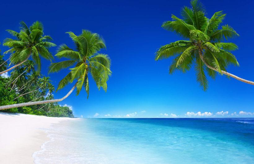 tropical-landscape-beach-plain-wall-murals