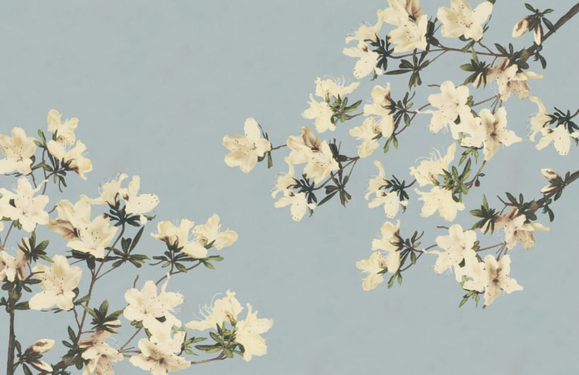 vintage cream & blue japanese floral wallpaper mural