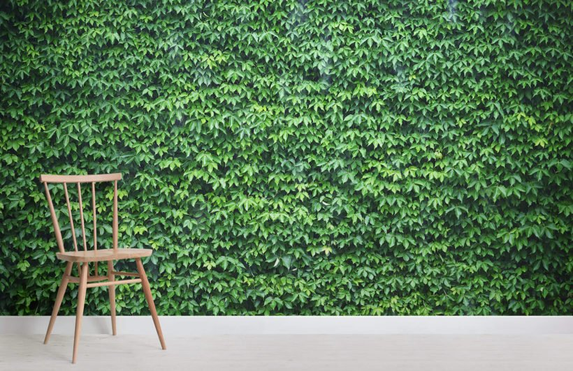 wall-of-green-ivy-texture-room-wall-murals