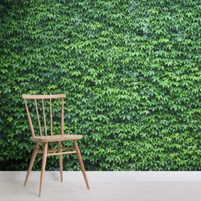 wall-of-green-ivy-texture-square-wall-murals