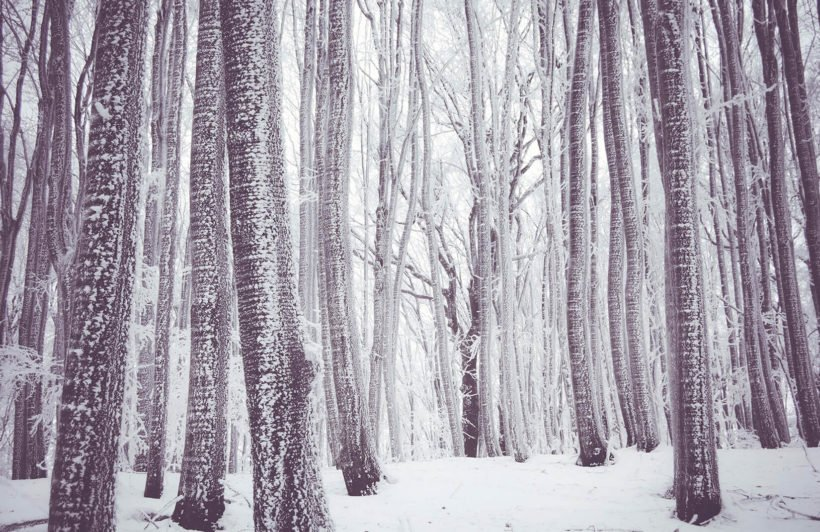 white-forest-forest-plain-1-wall-murals