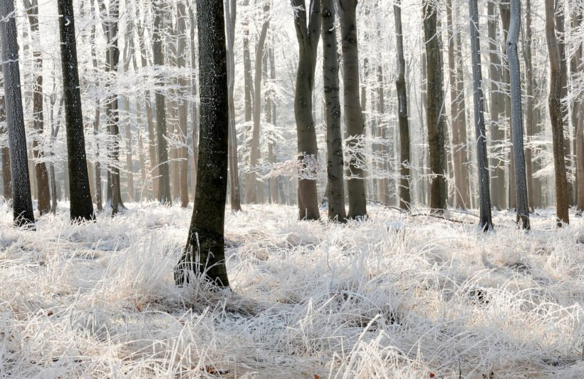 winter-frost-forest-forest-plain-wall-murals
