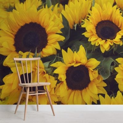 yellow sunflower photographic vintage floral wallpaper mural